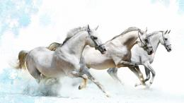 Running Horse HD Wallpapers