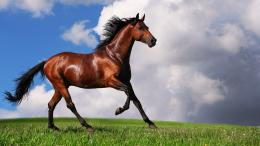 Brown Horse Wallpaper HD 1080p