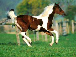 horse hd wallpapers 2013 07 23t01 19 00 07 00 rating 4 5 diposkan oleh