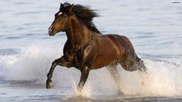 Running Horse HD Wallpaper Background jpg