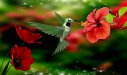 with: Hummingbird Hummingbird HD Wallpaper Hummingbird Wallpaper 1334
