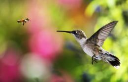 Hummingbird HD Wallpapers 552