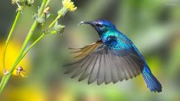Hummingbird HD Wallpapers 1415