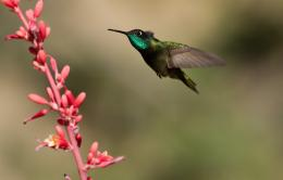 Hummingbird HD Wallpapers 238