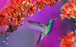 Hummingbird  Widescreen Resolutions 1920 x 1200 406