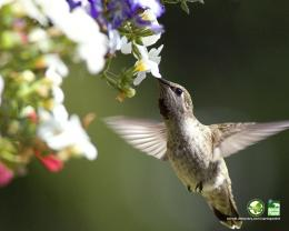 background hd wallpaper hummingbird moviecroft Background HD Wallpaper 1531