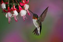 hummingbird hd wallpapers 294