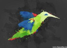Hummingbird Color Splash with black background 884