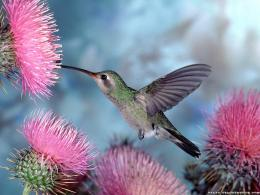 hummingbird wallpaper coolest minimalist wallpapers for your pc or mac 1219