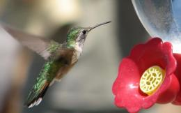 Hummingbird HD Wallpaper 571