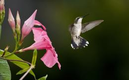with: Hummingbird Hummingbird HD Wallpaper Hummingbird Wallpaper 1967