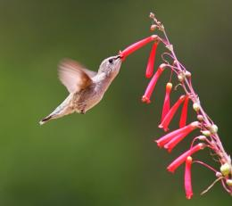 hummingbird hd wallpapers 1290