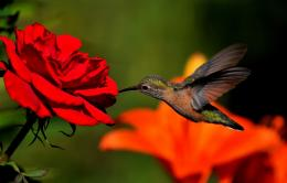 Hummingbird HD Wallpapers 893