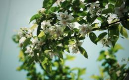 Jasmine Flowers hd wallpapers free download new amazing hd wallpapers 405