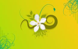 a1 jasmine flower background 3 1920×1200 820