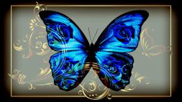 HD Butterfly Blue Jewelry Wallpaper