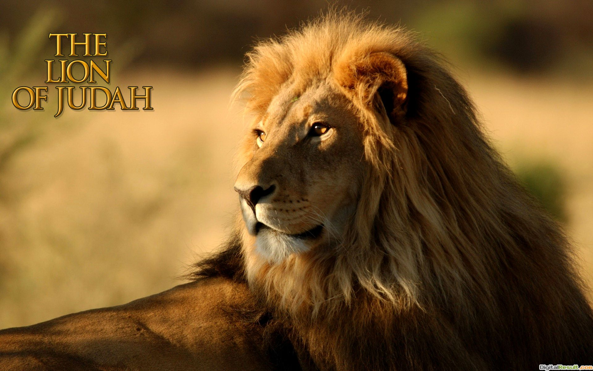 The Lion Of Judah HD Wallpaper Download this free Christian image free
