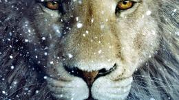 Homepage » Lion » white lion HD wallpaper