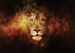 Lions New HD Wallpapers 2013 2014