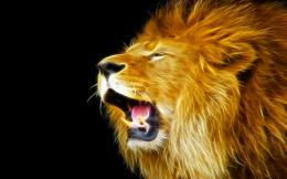 Tagged with: lion hd wallpapers Lion Wallpapers