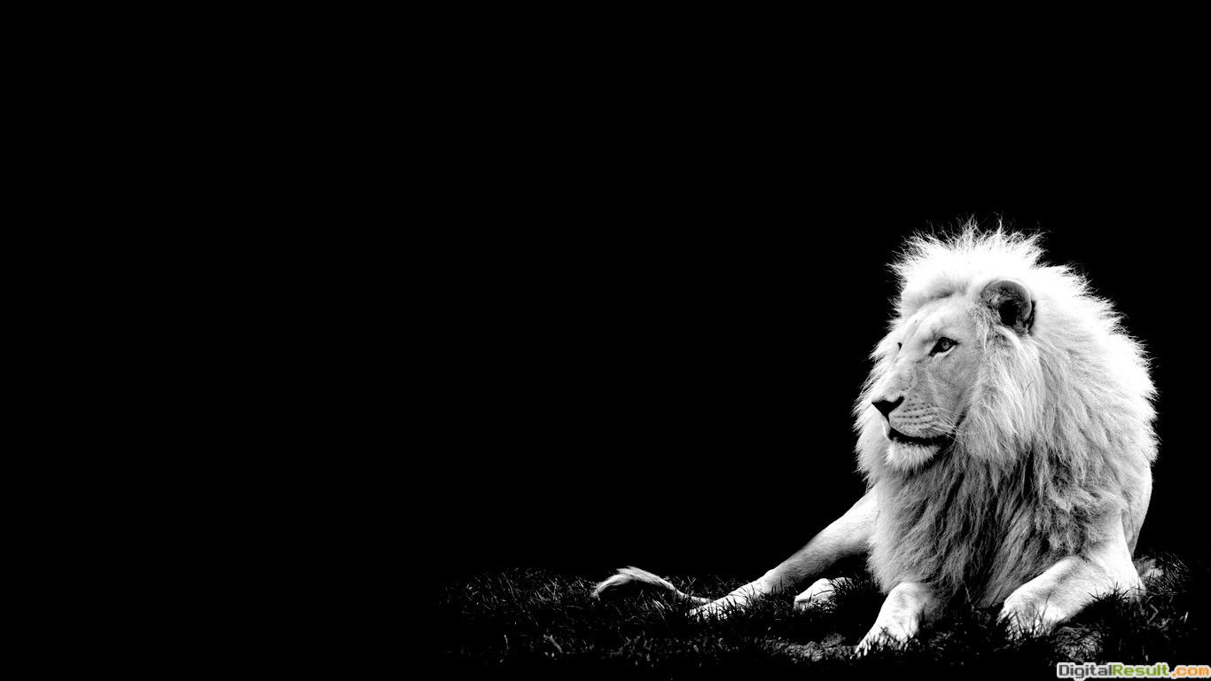 White Lion Wallpaper Desktop 10780 Hd Wallpapers