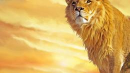 Homepage » Lion » lion wallpapers hd lion wallpaper