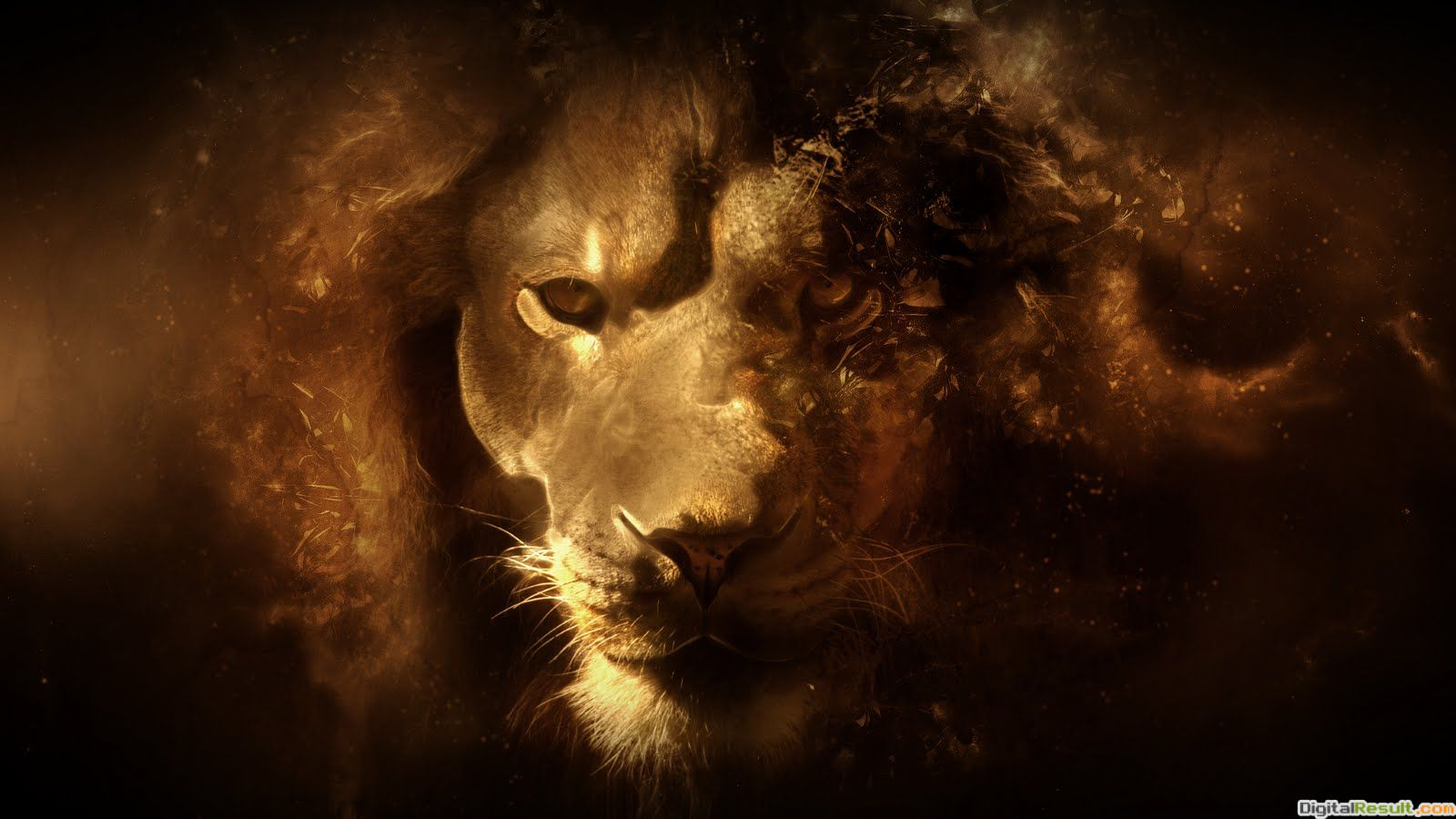 abstract lion hd wallpapers hd animal wallpaper lion abstract lion hd