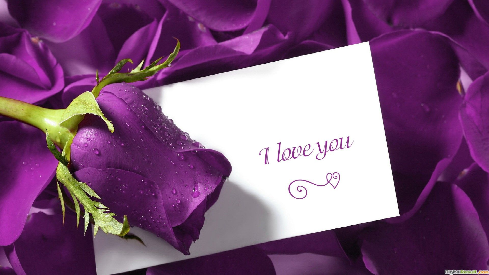 Love You Quotes Flower Background HD Wallpaper I Love You Quotes