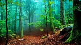 New hd forest wallpapers, Wallpapers of forest