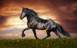 Morgan Horse Wallpapers 271