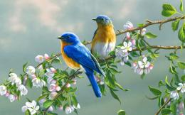 Couple of birds on a cherry branch HD wallpaper