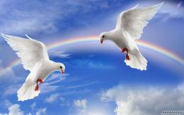 Awesome & Beautiful wallpapers OF Pigeon In HDFor More Wallpapers