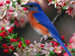 wallpapers , birds wallpapers, hd bird wallpaper, hd birds wallpapers