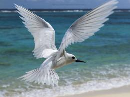 Beautiful Birds HD Wallpapers