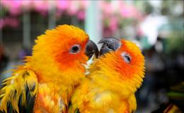 Cute love birds hd wallpapers