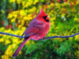 birds latest hd wallpapers beautiful birds latest hd wallpapers