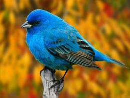 Birds hd wallpapers, bird wallpapers