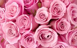 Special Pink Roses