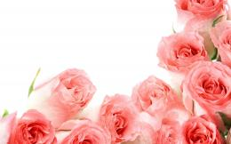 The best top desktop roses wallpapers hd rose wallpaper photo picture