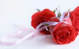 Tag: Red Rose Wallpapers, Images, Photos, Pictures and Backgrounds for