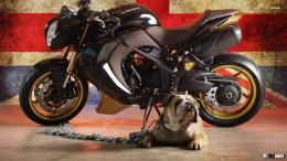 Vilner Triumph Speed Triple Bulldog Wallpapers Full HD Download Free 1448