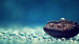Water Drops Photography Macro Seeds Free Hd Wallpaper with 1366x768 366