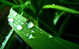 Water Drops HD Images 1427