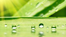 An extraordinary Beautiful Water Drops On Leaf Hd Desktop Wallpaper 485