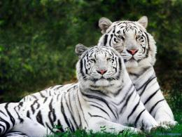 wild animals wallpapers 2 jpg