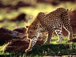 Wild Animal Funny Animal Mating Videos Pictures