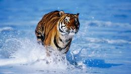 wild animal wallpaper categories animals wallpapers
