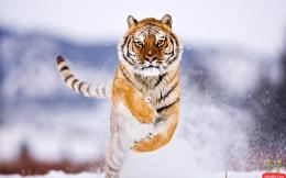 wildlife hd photos wildlife animal hd wildlife animal hd wildlife