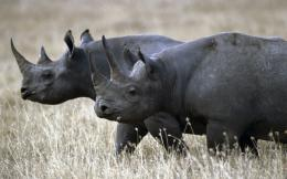 Wildlife rhinoceros Africa HD Wallpaper