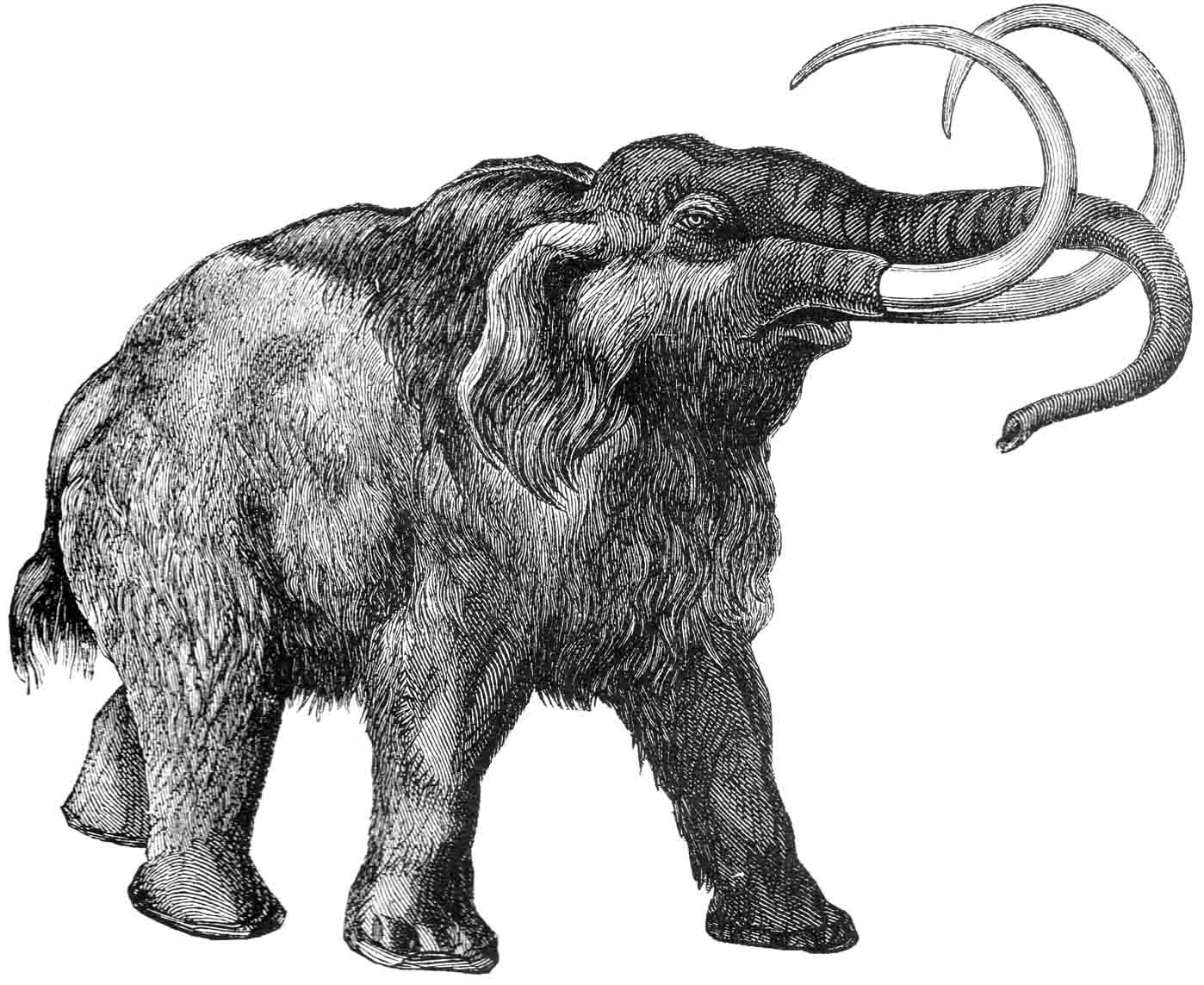 Woolly Mammoth Wallpapers 197